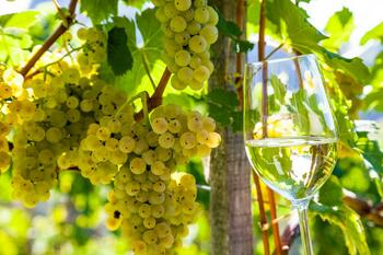 Stay with wine tasting in South Moravia