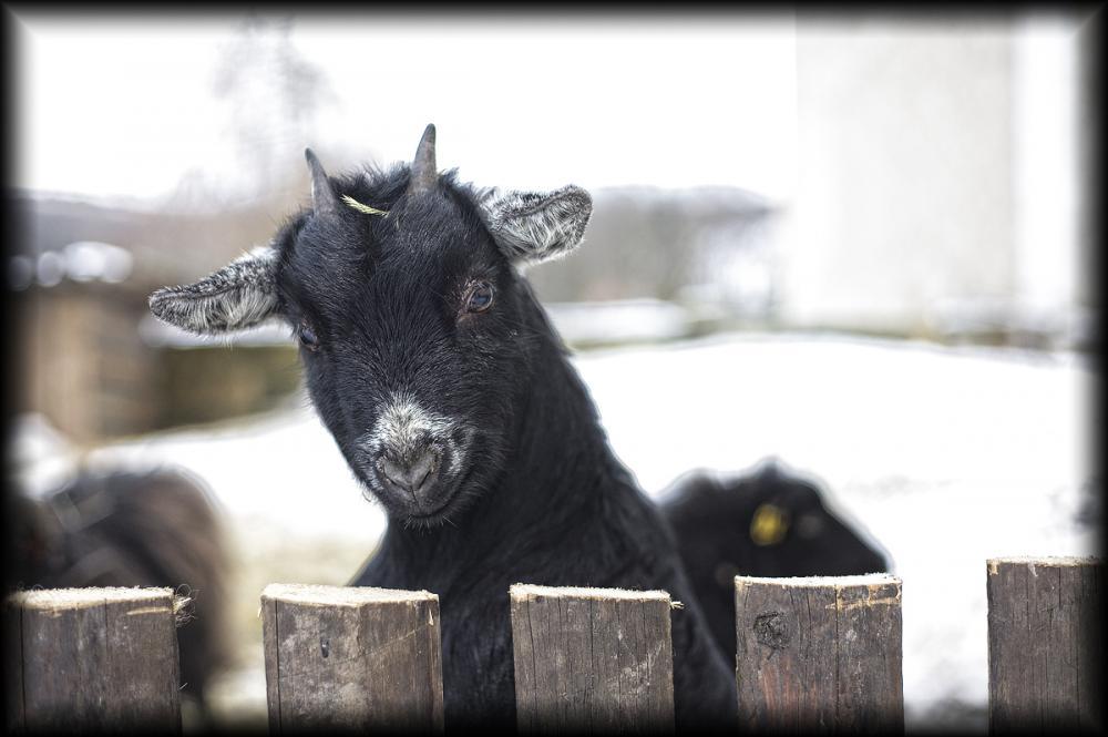 farma se zvířátky