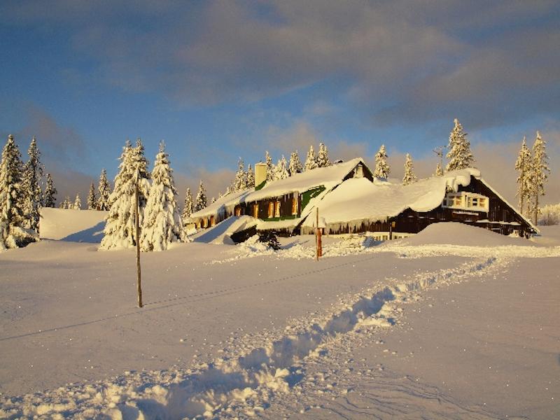 Lesní bouda