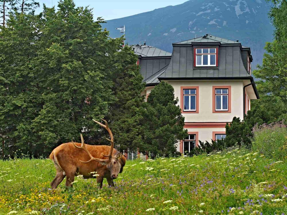Stará Morava v lete