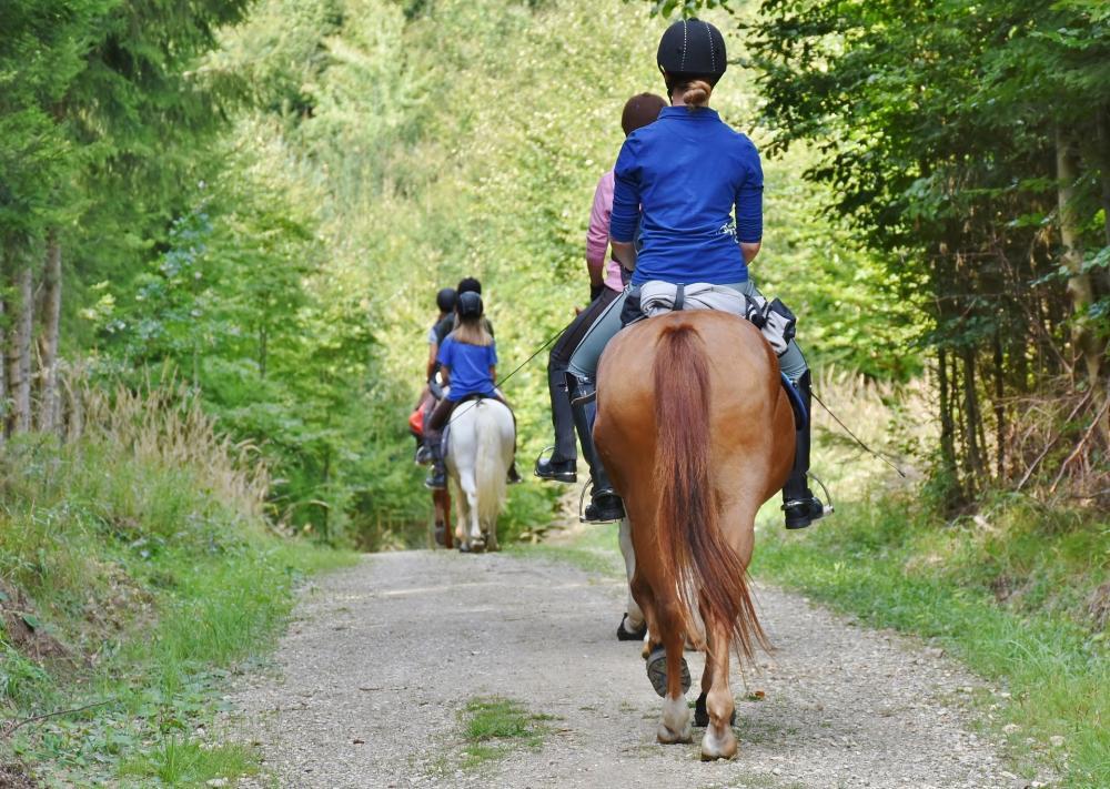 equestrian seminaries