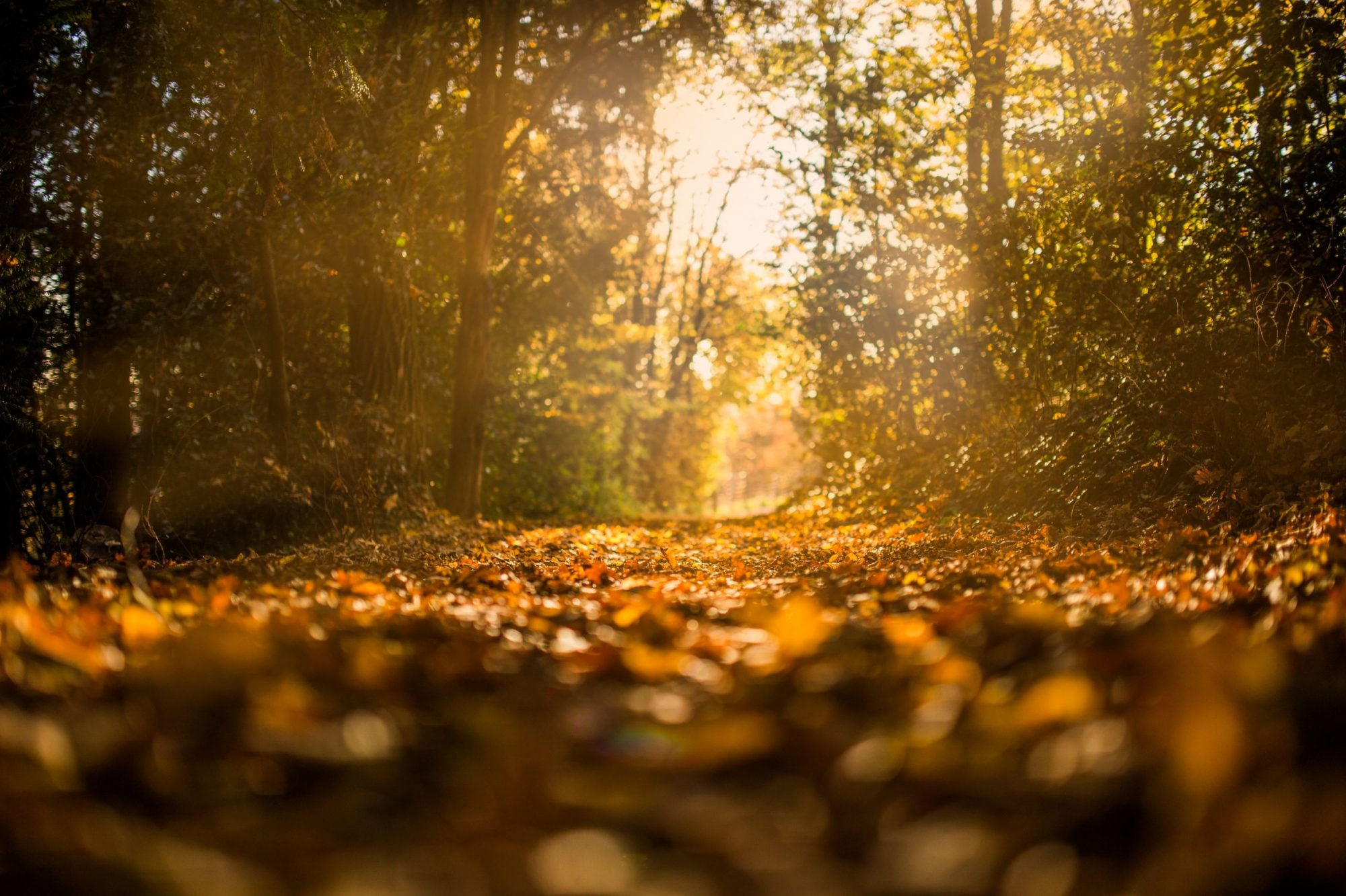 Podzimní relax na Medlově