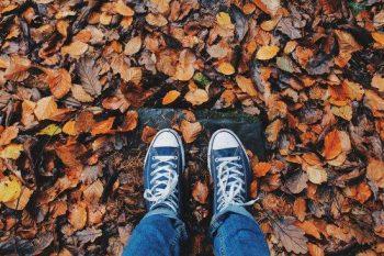 Podzim s Arnikou