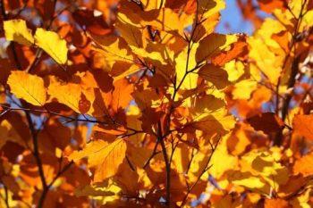 Podzimní minirelaxové svátkování